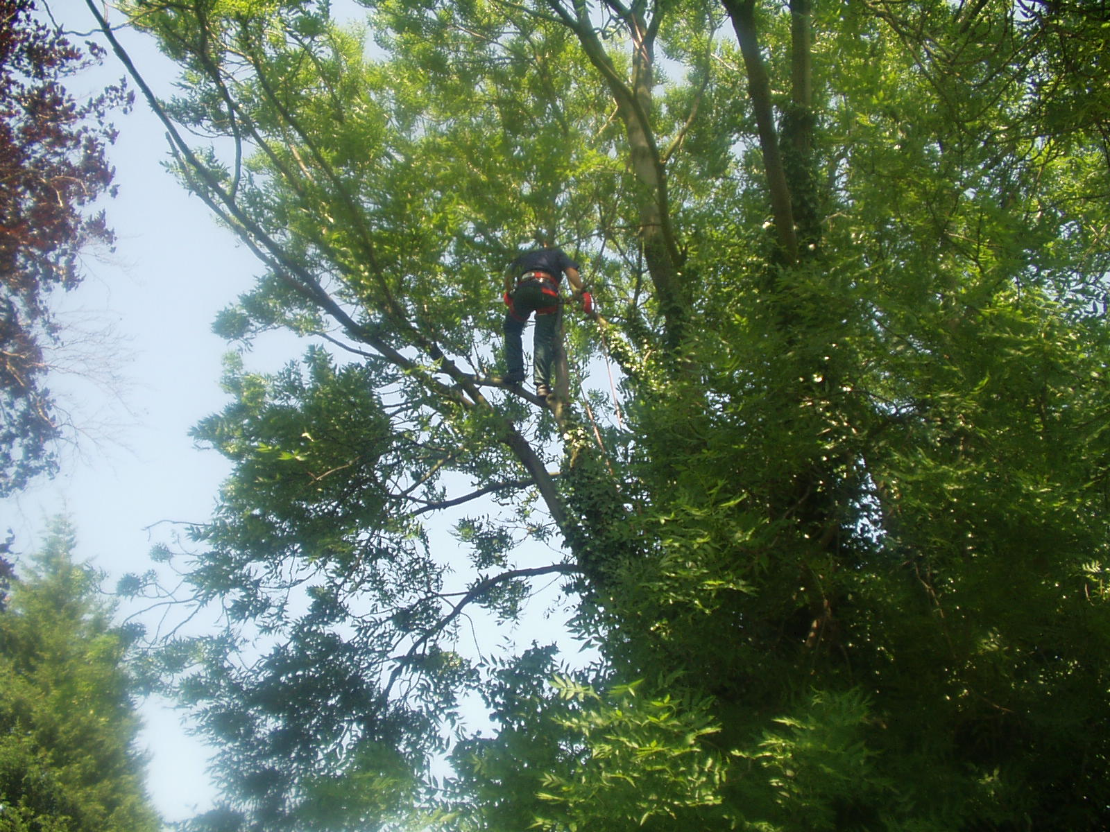 Tree surgery forevergreen gardens for Tree and garden services